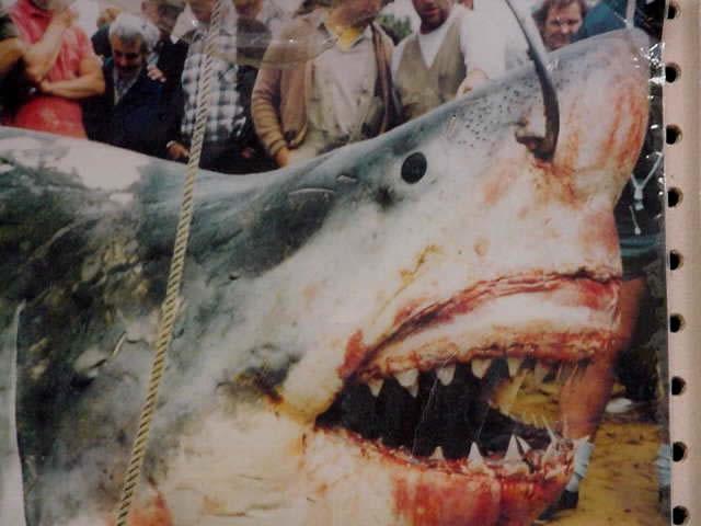 Shark fishing fear beneath for Great white shark fishing