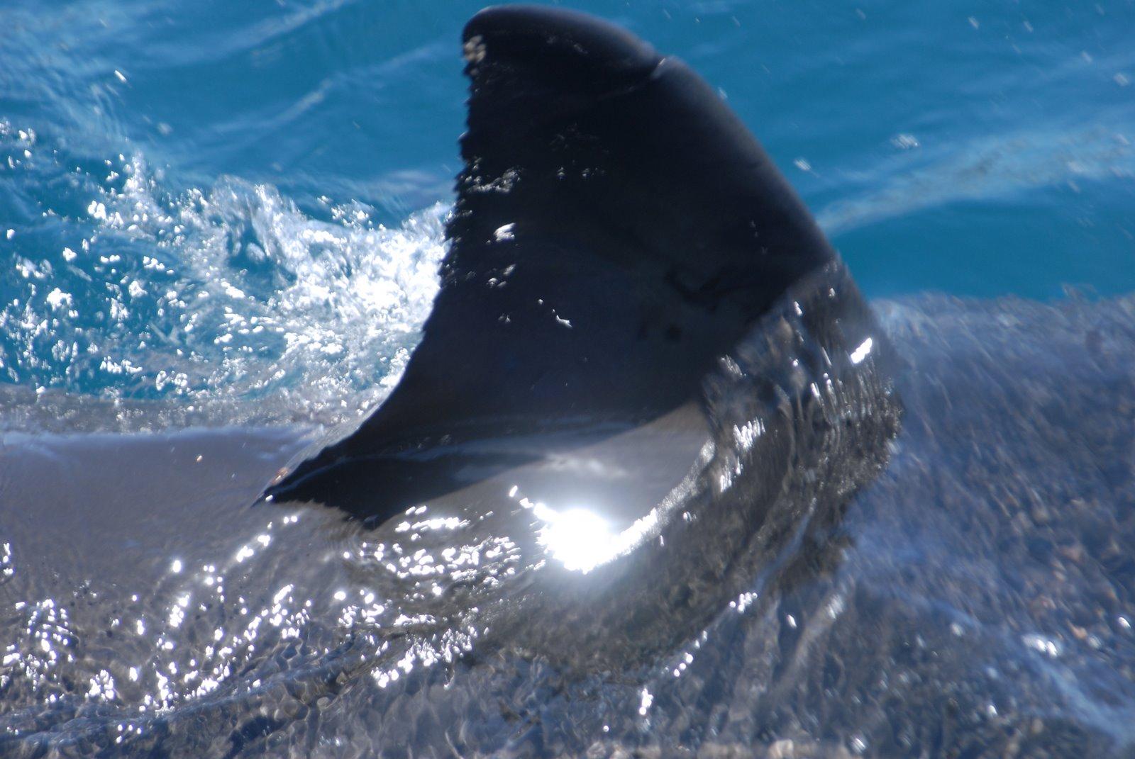 Tiger Shark Attacks
