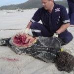 Shark Attack Victim Surfer