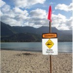 Hanalei Bay, Hawaii, Shark Sighting Closure