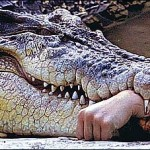 Crocodile Eats Man's Hand