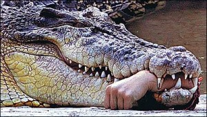 Crocodile eating a man\'s hand.