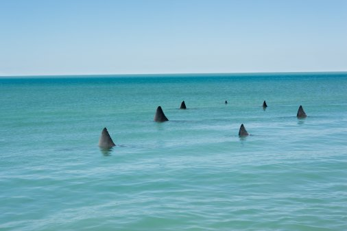 shark attacks in florida. We reported on three shark