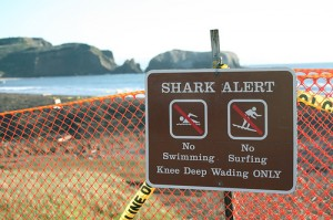Shark Alert Beach Closure Sign