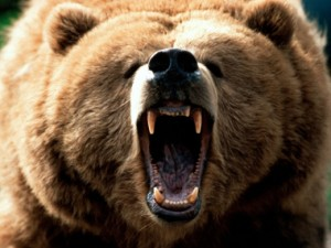 A gigantic brown bear with a bad, bad, attitude can be your worst day - and your last.