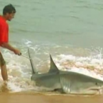 Great White Shark Fishing: Don't Try This At Home