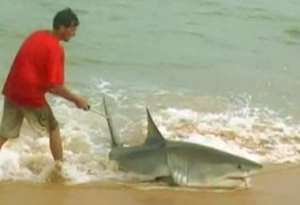 Bored? Try your hand at some Great White Shark fishing - casting from the beach!