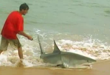 Great white shark fishing don t try this at home for Great white shark fishing