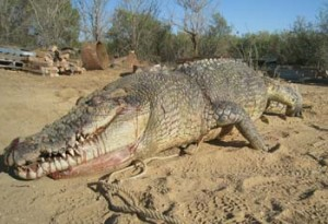 Shooting this crocodile was a mistake - his angry, massive, brother has sworn a blood oath of revenge against Australians
