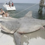 "Australian Shark Activity Incites ""Expert Opinions"""