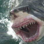 A Hungry Great White Shark... Frightening.