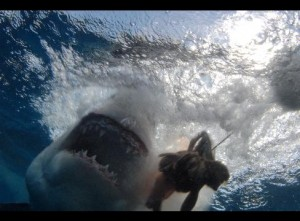 This great white shark was snapped from the safety of a cage