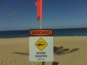 Signs were posted to warn of the recent shark sightings in Waimea Bay
