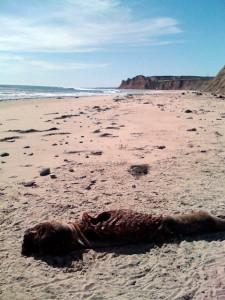 nother Savage Mutilation on Bixby Ranch coastline