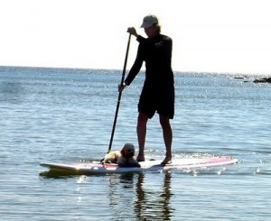 Stand-Up Paddle Surfers: Potential Shark Attack Victims?