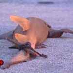 Men Dragging Shark Through Miami Caught on Tape