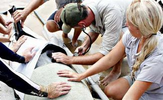Workers Attempt to Revive False Killer Whale