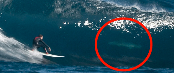 Shark Attacks in Western Australia &#8211; What Surfers Should Know