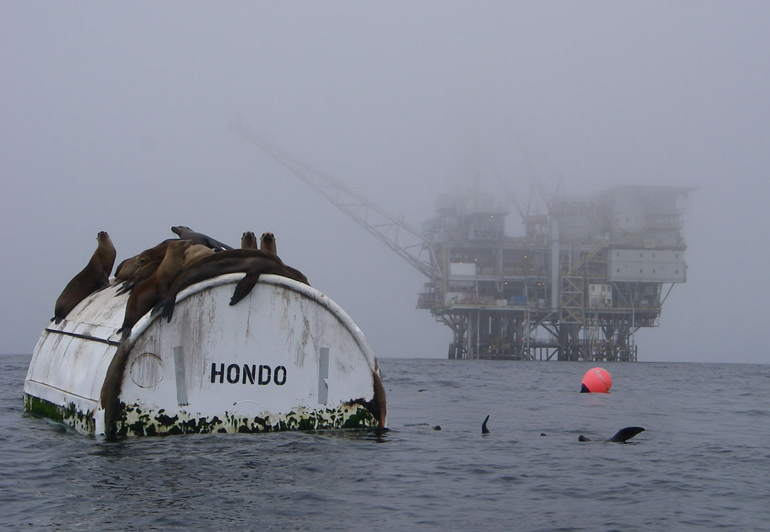 Great White Shark Attacks Kayak