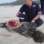Shark Attack Victim Surfer